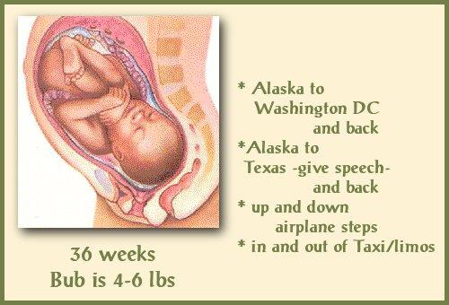fetusat36wks